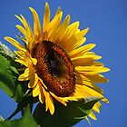 Sunny Side Up by Laurie Minor
