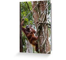 At Home in the Trees Greeting Card