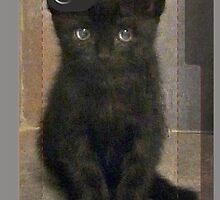 Cute Kitten iphone cover by Sue Nichol