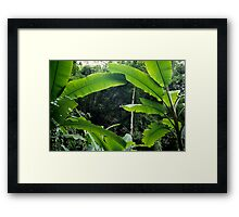Thailand, banana trees (Musa sp.) in jungle Framed Print