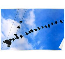 Pigeons perched on overhead wire Poster