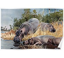 Friedrich Wilhelm Kuhnert A group of hippopotami drinking and resting in the river and Wellcome Poster