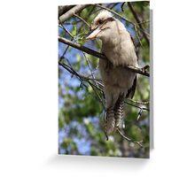 Young Kookaburra Greeting Card