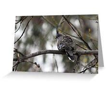Crested Pigeon Greeting Card
