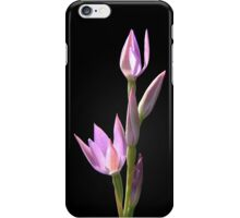 Pink sun orchid iPhone Case/Skin