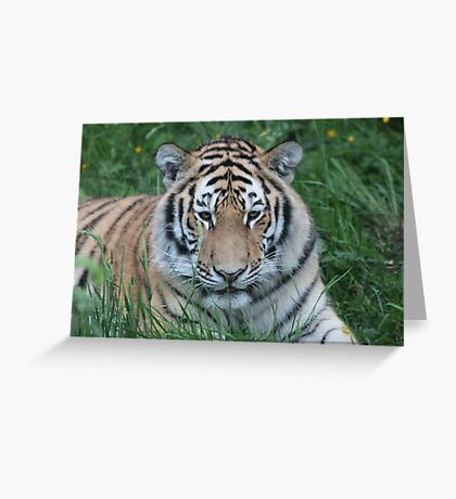 Tiger Stripes Greeting Card