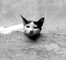 Feline Plateau  by Vivek George Koshy