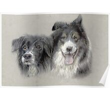 bess and bob border collies Poster