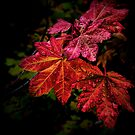 Red Is Best by Charles &amp; Patricia   Harkins ~ Picture Oregon