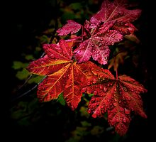 Red Is Best by Charles & Patricia   Harkins ~ Picture Oregon