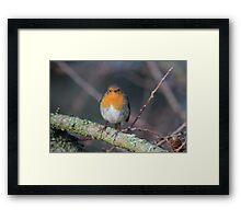 Grumpy Robin Framed Print