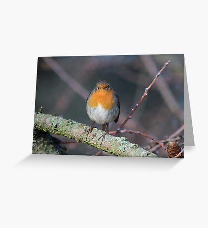 Grumpy Robin Greeting Card