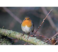 Grumpy Robin Photographic Print