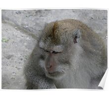 Pondering Monkey Poster
