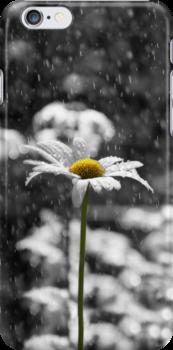 Sunny Disposition Despite Showers iPhone Case by Lisa Knechtel