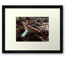 Mushroom Kingdom (9585) Framed Print