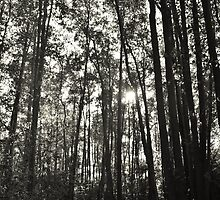 Tall Trees - Scaynes Hill #1 by Matthew Floyd