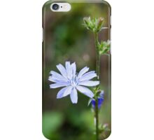 Chicory - iPhone iPhone Case/Skin