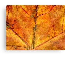 Detailed Fall Maple Leaf Texture 4 Canvas Print