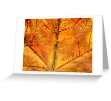 Detailed Fall Maple Leaf Texture 4 Greeting Card