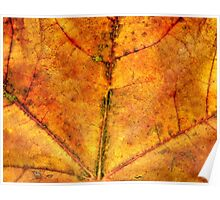 Detailed Fall Maple Leaf Texture 4 Poster