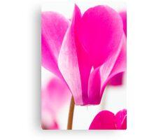 Hot Pink Cyclamen Canvas Print