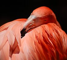 Flamingo pink on black by loiteke
