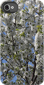 White blossom by Marie Brown ©