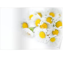 Bunch of Daisies Poster