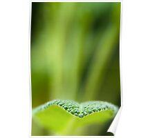 Minimal Sage Poster