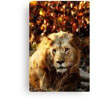 Kruger National Park, South Africa. 2009 I Canvas Print