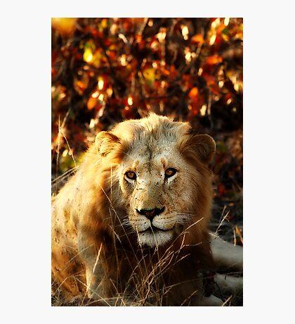 Kruger National Park, South Africa. 2009 I Photographic Print