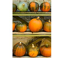 Harvest Display Photographic Print