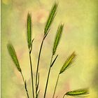 Summer Grasses - iPhone case by Jan Bickerton