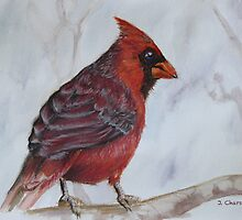 Blue Eyed Cardinal by Jewel  Charsley