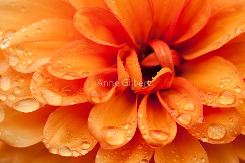 After The Rain by Anne Gilbert