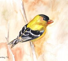 Gold Finch by Jewel  Charsley
