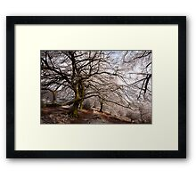 Frosted Path Framed Print