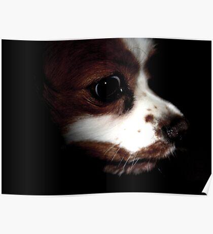 Dark Dog Poster