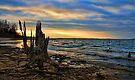 Sunset Beach by Carolyn  Fletcher