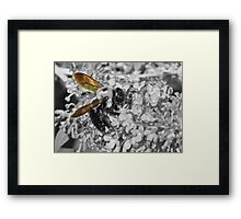 Bumble Wings Framed Print