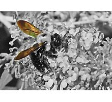 Bumble Wings Photographic Print