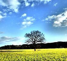 Tree and clouds by ©The Creative  Minds