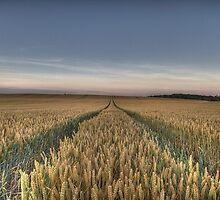 Wheat field tracks by davediver