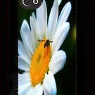 Bug on Iphone case by RockyWalley
