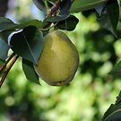 Pear by T. Victor