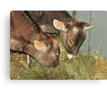 baby Cows Canvas Print