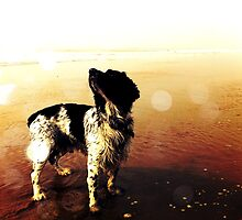 sea dog ! by andyhickling