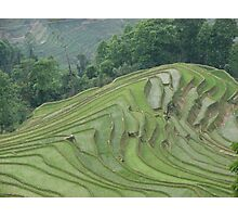 Rice terraces at Meng Ping Photographic Print
