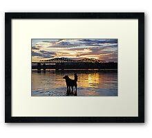 Golden {Retriever} Sunset Framed Print
